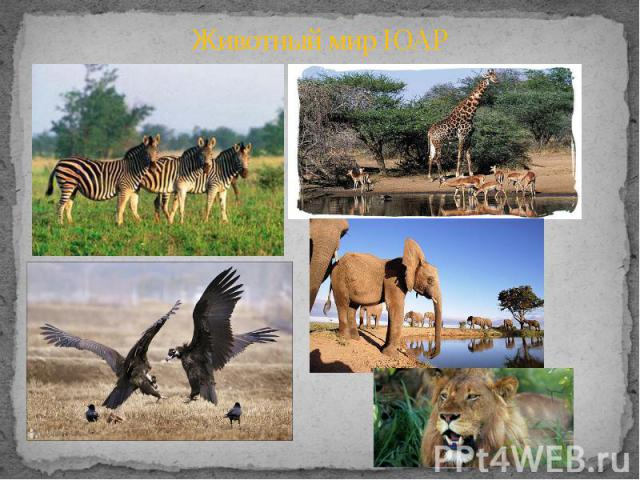 Животный мир ЮАР