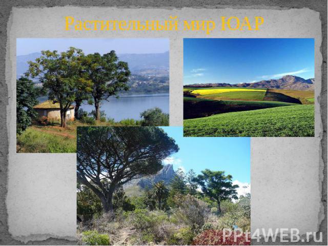 Растительный мир ЮАР