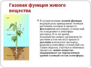 В осуществлении газовой функции ведущая роль принадлежит зеленым растениям, кото