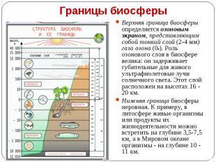 Верхняя граница биосферы определяется озоновым экраном, представляющим собой тон