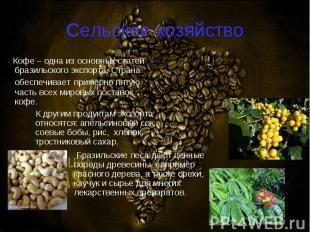 Кофе – одна из основных статей бразильского экспорта. Страна обеспечивает пример