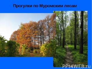 Прогулки по Муромским лесам Прогулки по Муромским лесам