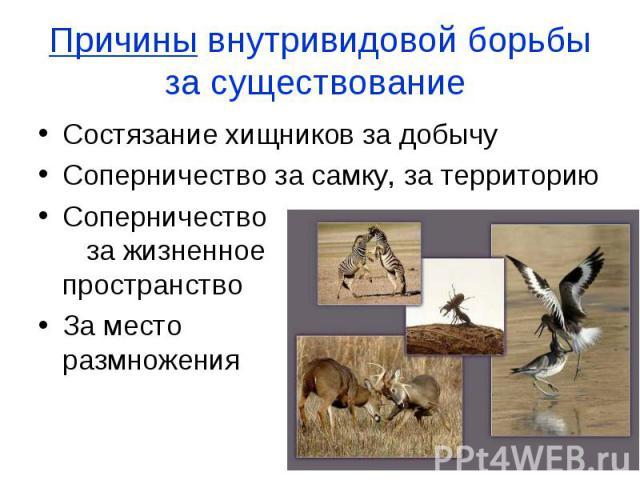 Состязание хищников за добычу Состязание хищников за добычу Соперничество за самку, за территорию Соперничество за жизненное пространство За место размножения