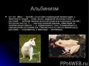 (от лат. albus — белый), отсутствие нормальной пигментации: у животных и людей —