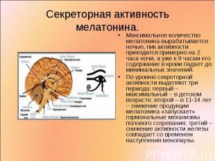 Максимальное количество мелатонина вырабатывается ночью, пик активности приходит