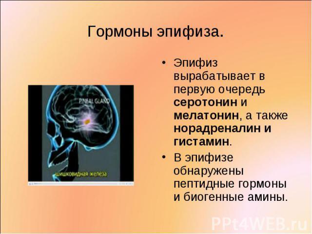 Эпифиз вырабатывает в первую очередь серотонин и мелатонин, а также норадреналин и гистамин. Эпифиз вырабатывает в первую очередь серотонин и мелатонин, а также норадреналин и гистамин. В эпифизе обнаружены пептидные гормоны и биогенные амины.