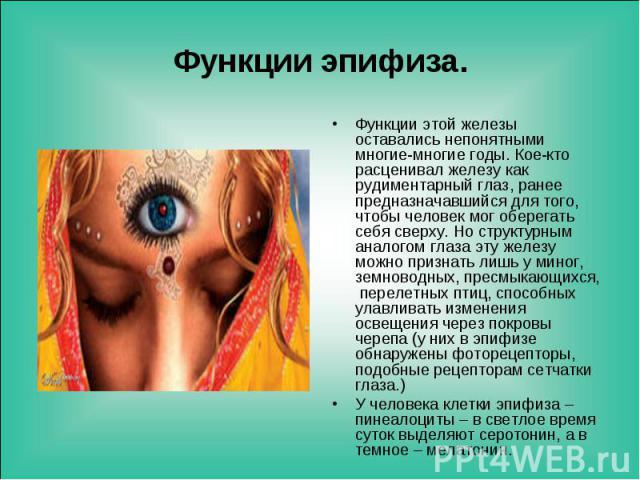 Функции этой железы оставались непонятными многие-многие годы. Кое-кто расценивал железу как рудиментарный глаз, ранее предназначавшийся для того, чтобы человек мог оберегать себя сверху. Но структурным аналогом глаза эту железу можно признать лишь …