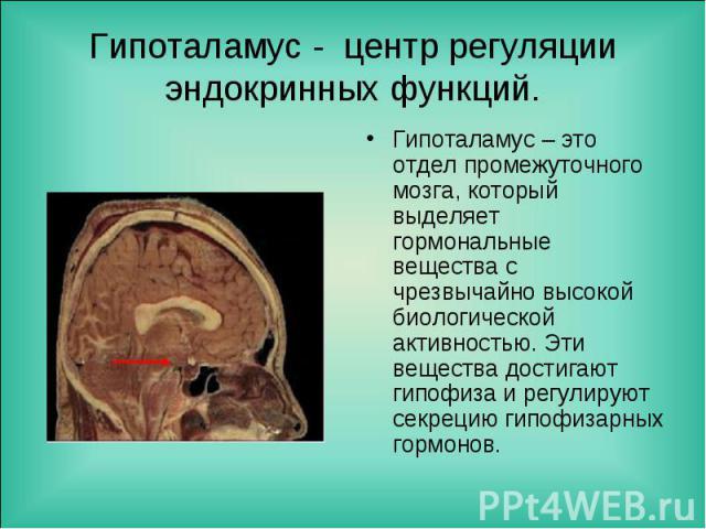 Гипоталамус – это отдел промежуточного мозга, который выделяет гормональные вещества с чрезвычайно высокой биологической активностью. Эти вещества достигают гипофиза и регулируют секрецию гипофизарных гормонов. Гипоталамус – это отдел промежуточного…