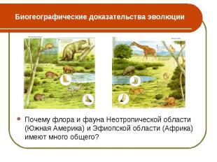 Почему флора и фауна Неотропической области (Южная Америка) и Эфиопской области