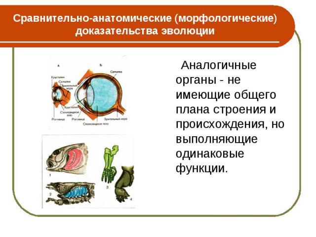 Аналогичные органы - не имеющие общего плана строения и происхождения, но выполняющие одинаковые функции. Аналогичные органы - не имеющие общего плана строения и происхождения, но выполняющие одинаковые функции.