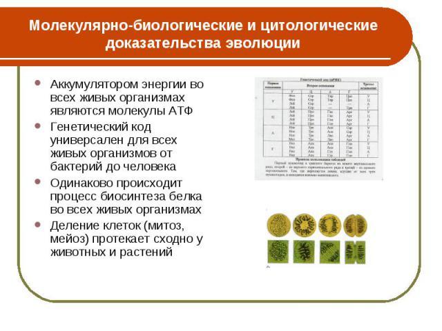 Аккумулятором энергии во всех живых организмах являются молекулы АТФ Аккумулятором энергии во всех живых организмах являются молекулы АТФ Генетический код универсален для всех живых организмов от бактерий до человека Одинаково происходит процесс био…