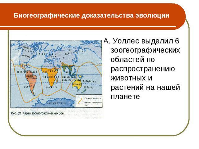 А. Уоллес выделил 6 зоогеографических областей по распространению животных и растений на нашей планете А. Уоллес выделил 6 зоогеографических областей по распространению животных и растений на нашей планете