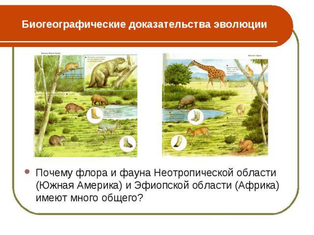 Почему флора и фауна Неотропической области (Южная Америка) и Эфиопской области (Африка) имеют много общего? Почему флора и фауна Неотропической области (Южная Америка) и Эфиопской области (Африка) имеют много общего?