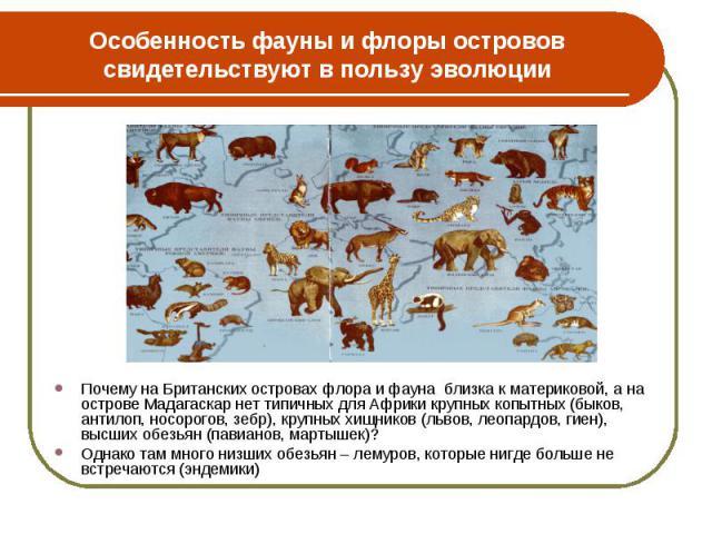 Почему на Британских островах флора и фауна близка к материковой, а на острове Мадагаскар нет типичных для Африки крупных копытных (быков, антилоп, носорогов, зебр), крупных хищников (львов, леопардов, гиен), высших обезьян (павианов, мартышек)? Поч…