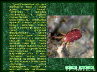 Однако комнатные растения поражаются также и рядом других видов клещей: Tetranyc