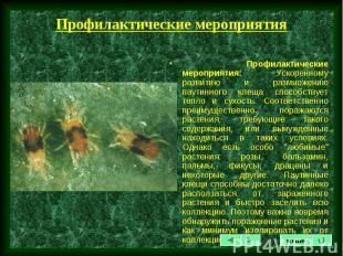 Профилактические мероприятия: Ускоренному развитию и размножению паутинного клещ