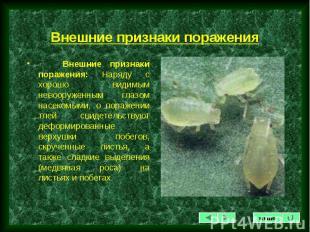 Внешние признаки поражения: Наряду с хорошо видимым невооруженным глазом насеком
