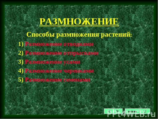 Способы размножения растений: Способы размножения растений: 1) Размножение отводками 2) Размножение отпрысками 3) Размножение усами 4) Размножение черенками 5) Размножение семенами