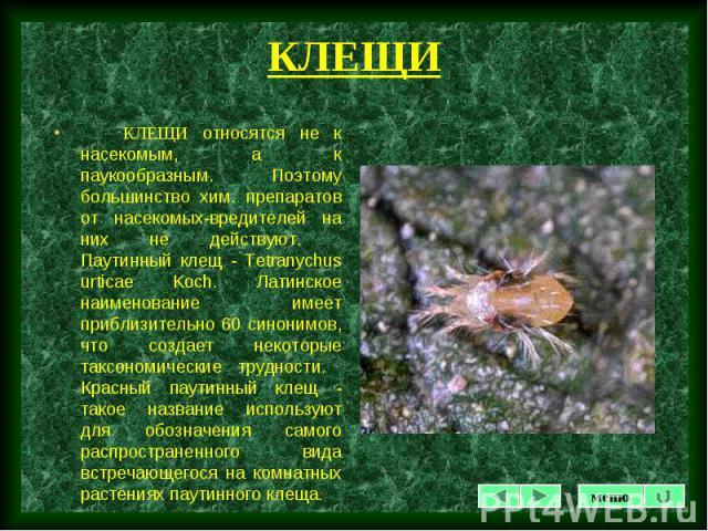 КЛЕЩИ относятся не к насекомым, а к паукообразным. Поэтому большинство хим. препаратов от насекомых-вредителей на них не действуют. Паутинный клещ - Tetranychus urticae Koch. Латинское наименование имеет приблизительно 60 синонимов, что создает неко…