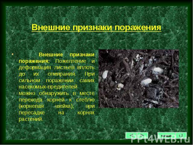 Внешние признаки поражения: Пожелтение и деформация листьев вплоть до их отмирания. При сильном поражении самих насекомых-вредителей можно обнаружить в месте перехода корней к стеблю (корневая шейка), при пересадке на корнях растений. Внешние призна…