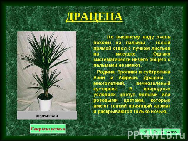 По внешнему виду очень похожи на пальмы - голый прямой ствол с пучком листьев на макушке. Однако систематически ничего общего с пальмами не имеют. По внешнему виду очень похожи на пальмы - голый прямой ствол с пучком листьев на макушке. Однако систе…