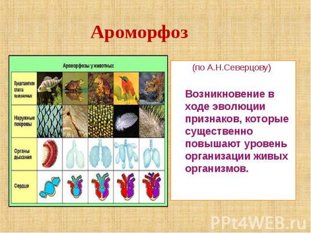 (по А.Н.Северцову) (по А.Н.Северцову) Возникновение в ходе эволюции признаков, которые существенно повышают уровень организации живых организмов.