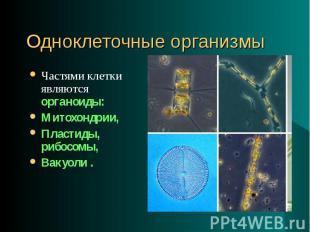 Частями клетки являются органоиды: Частями клетки являются органоиды: Митохондри