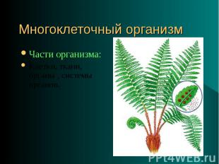 Части организма: Части организма: Клетки, ткани, органы , системы органов.