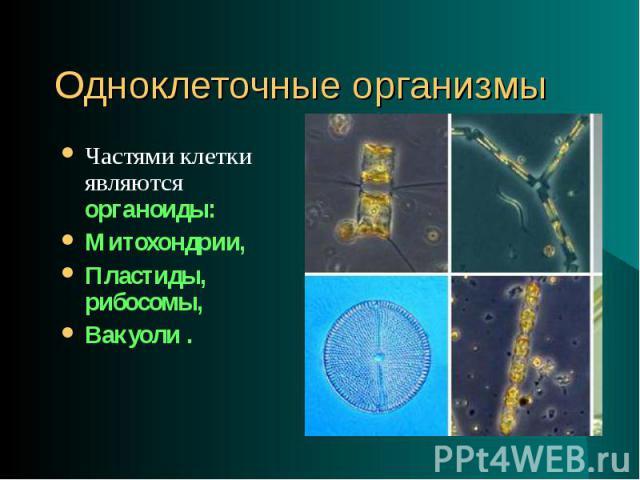 Частями клетки являются органоиды: Частями клетки являются органоиды: Митохондрии, Пластиды, рибосомы, Вакуоли .