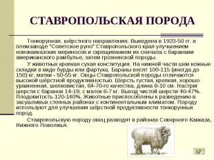 """Тонкорунная, шёрстного направления. Выведена в 1923-50 гг. в племзаводе """"Со"""