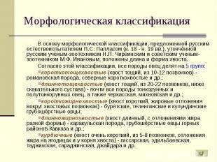В основу морфологической классификации, предложенной русским естествоиспытателем