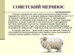 Порода тонкорунных овец шерстно-мясного направления. Выведена в 1920-51 гг. в юж