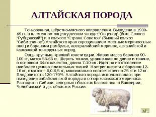 Тонкорунная, шёрстно-мясного направления. Выведена в 1930-49 гг. в племенном овц