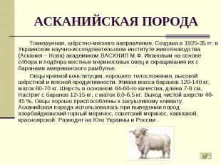 Тонкорунная, шёрстно-мясного направления. Создана в 1925-35 гг. в Украинском нау