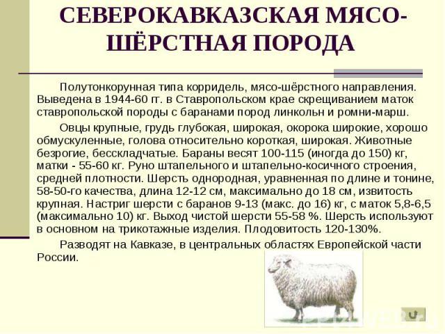 Полутонкорунная типа корридель, мясо-шёрстного направления. Выведена в 1944-60 гг. в Ставропольском крае скрещиванием маток ставропольской породы с баранами пород линкольн и ромни-марш. Полутонкорунная типа корридель, мясо-шёрстного направления. Выв…