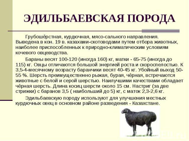 Грубошёрстная, курдючная, мясо-сального направления. Выведена в кон. 19 в. казахами-скотоводами путем отбора животных, наиболее приспособленных к природно-климатическим условиям кочевого овцеводства. Грубошёрстная, курдючная, мясо-сального направлен…