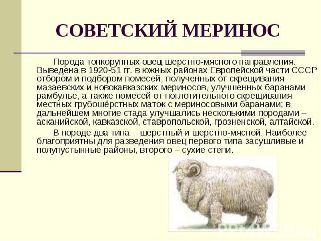 Порода тонкорунных овец шерстно-мясного направления. Выведена в 1920-51 гг. в южных районах Европейской части СССР отбором и подбором помесей, полученных от скрещивания мазаевских и новокавказских мериносов, улучшенных баранами рамбулье, а также пом…