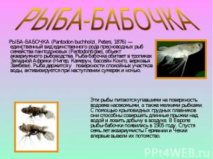 РЫБА-БАБОЧКА (Pantodon buchholzi, Peters, 1876) — единственный вид единственного