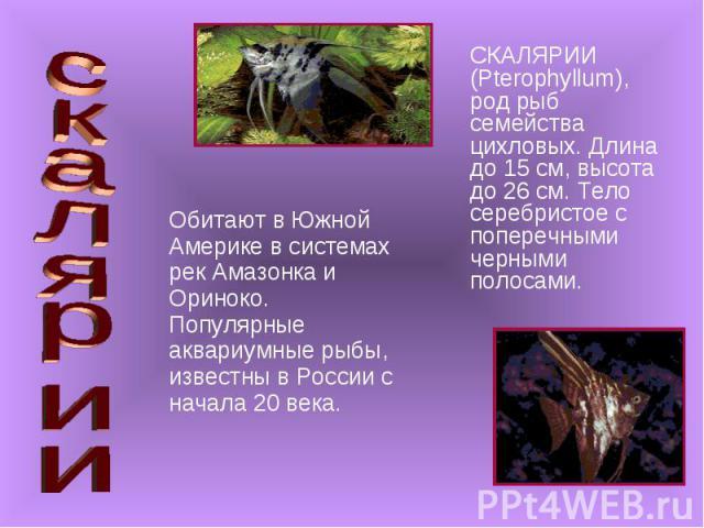 Обитают в Южной Америке в системах рек Амазонка и Ориноко. Популярные аквариумные рыбы, известны в России с начала 20 века. Обитают в Южной Америке в системах рек Амазонка и Ориноко. Популярные аквариумные рыбы, известны в России с начала 20 века.
