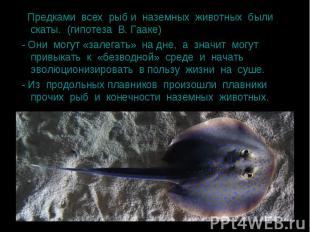 Предками всех рыб и наземных животных были скаты. (гипотеза В. Гааке) Предками в