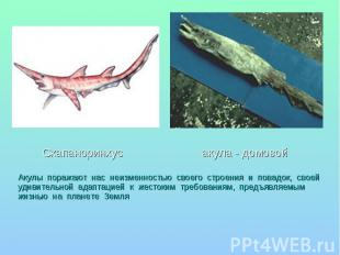 Скапаноринхус акула - домовой