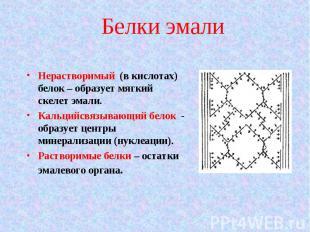 Нерастворимый (в кислотах) белок – образует мягкий скелет эмали. Нерастворимый (
