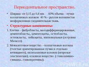 Ширина -от 0,15 до 0,4 мм. 60% объема – пучки коллагеновых волокон 40 % - рыхлая