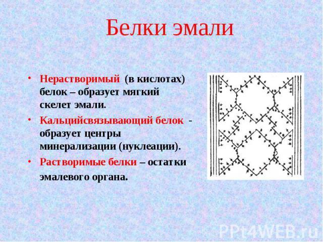 Нерастворимый (в кислотах) белок – образует мягкий скелет эмали. Нерастворимый (в кислотах) белок – образует мягкий скелет эмали. Кальцийсвязывающий белок - образует центры минерализации (нуклеации). Растворимые белки – остатки эмалевого органа.