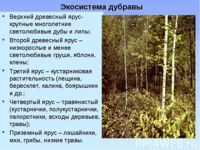 Верхний древесный ярус- крупные многолетние светолюбивые дубы и липы; Верхний древесный ярус- крупные многолетние светолюбивые дубы и липы; Второй древесный ярус – низкорослые и менее светолюбивые груши, яблони, клены; Третий ярус – кустарниковая ра…