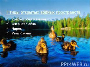 Краснозобая Казарка Краснозобая Казарка Озерная Чайка Чирок Утка Кряква