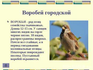 ВОРОБЬИ - род птиц семейства ткачиковых. Длина 12-15 см. У самцов многих видов н