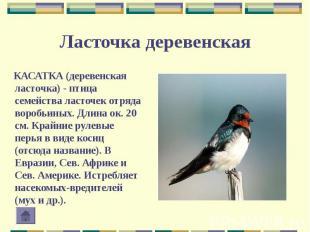 КАСАТКА (деревенская ласточка) - птица семейства ласточек отряда воробьиных. Дли