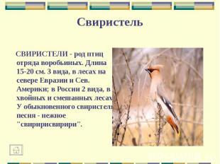 СВИРИСТЕЛИ - род птиц отряда воробьиных. Длина 15-20 см. 3 вида, в лесах на севе