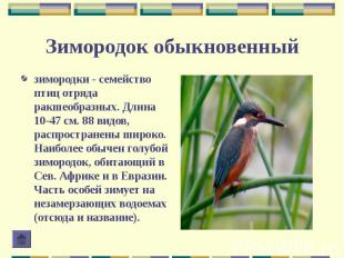зимородки - семейство птиц отряда ракшеобразных. Длина 10-47 см. 88 видов, распр